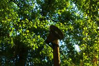 树叶中的喇叭