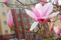 争鲜斗艳的花与花苞