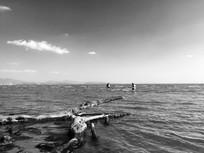 滇池浅滩黑白风光