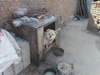狗窝里的小狗图片