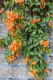 漂亮的植物墙