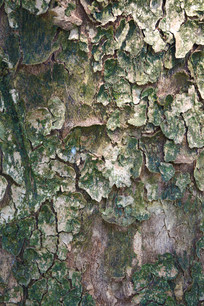 树木的纹理