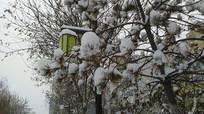 树上的雪和路灯图片