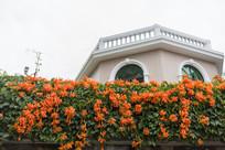 植物墙与别墅