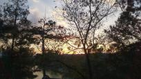 避暑山庄傍晚树木图片