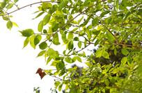 春天的树枝