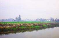 河岸边的绿色田野风景图