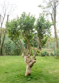 青秀山的树木