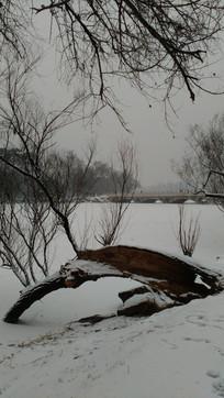 雪地里的大树图片