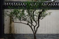 青瓦白墙绿树