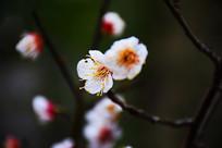 粉色桃花细节摄影图