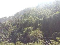 高速路边的原始森林