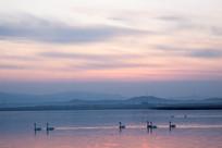 黄昏中的天鹅湖