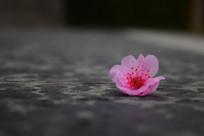 落在地上的花朵