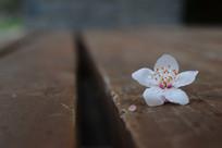 落在木板上的白色花朵
