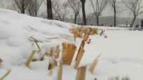 雪地里的草根图片