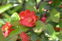 橘红色的花