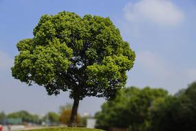 蓝天绿色大树