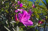 阳光下盛开的紫色花卉