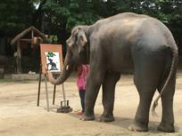 表演画画的大象