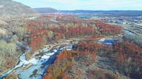 郊外冰河红柳风景