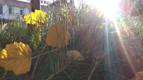 阳光下的秋叶图片