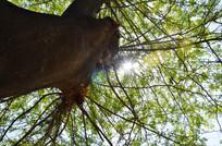 皂荚树上透下来的一束阳光