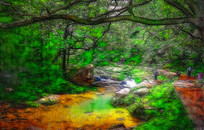 丛林小溪风景