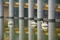 雕塑水上天鹅