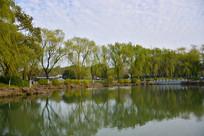 公园杨柳水景