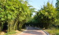 公园竹林道路