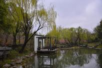 湖面杨柳茶亭