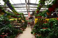 盆载花卉市场