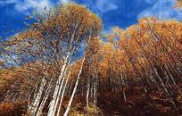 秋色丛林风景