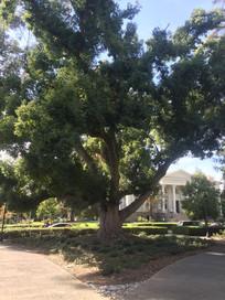 别墅旁的树木图片