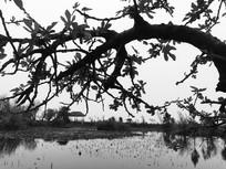池塘边的粗壮树枝