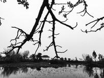 池塘边的树枝