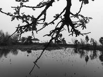池塘边的树枝枝叶