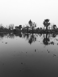 滇池湿地池塘风光