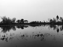 滇池湿地池塘景色