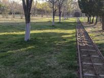 绿地上的观光车轨道