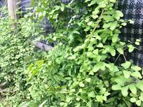 绿色植物背景图