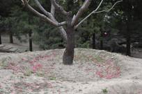 散落一地的桃花