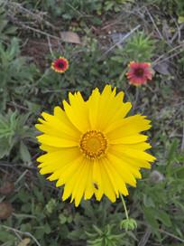 盛开的黄色小花