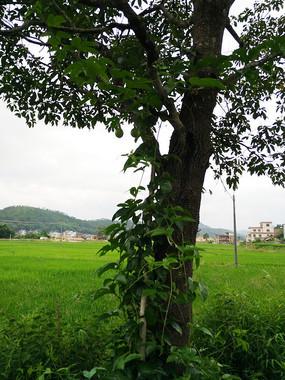 田园风景图