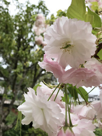 白色花侧面