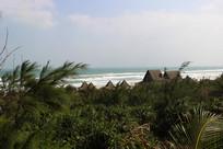 海南文昌月亮湾海岸植被