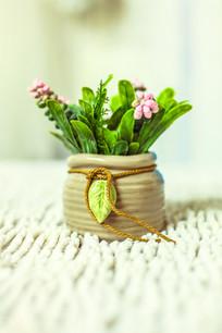 一盆绿色的盆栽
