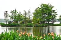 广州海珠湖湿地公园风景图片