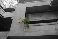建筑一点绿